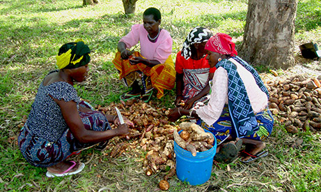 Women in Tanzania prepare sweet potatoes as part of Enhanced Homestead Food Production Project. Photo: Irish Aid.