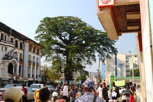 The Cotton Tree is a Freetown Landmark. Sierra Leone