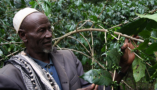 Farmer Hasan Lemu with his crop of mountain coffee in the Ethiopian Bale Mountains