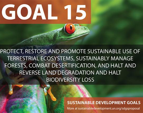 Goal 15